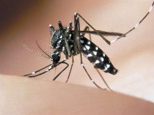 zanzara tigre, zika